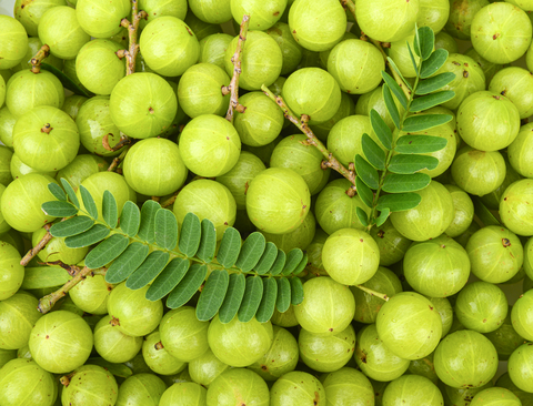 A picture of Indian gooseberry/Saberry